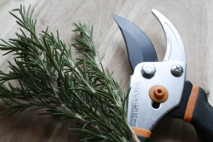 Freshly cut rosemary waiting to be put in a biscuit